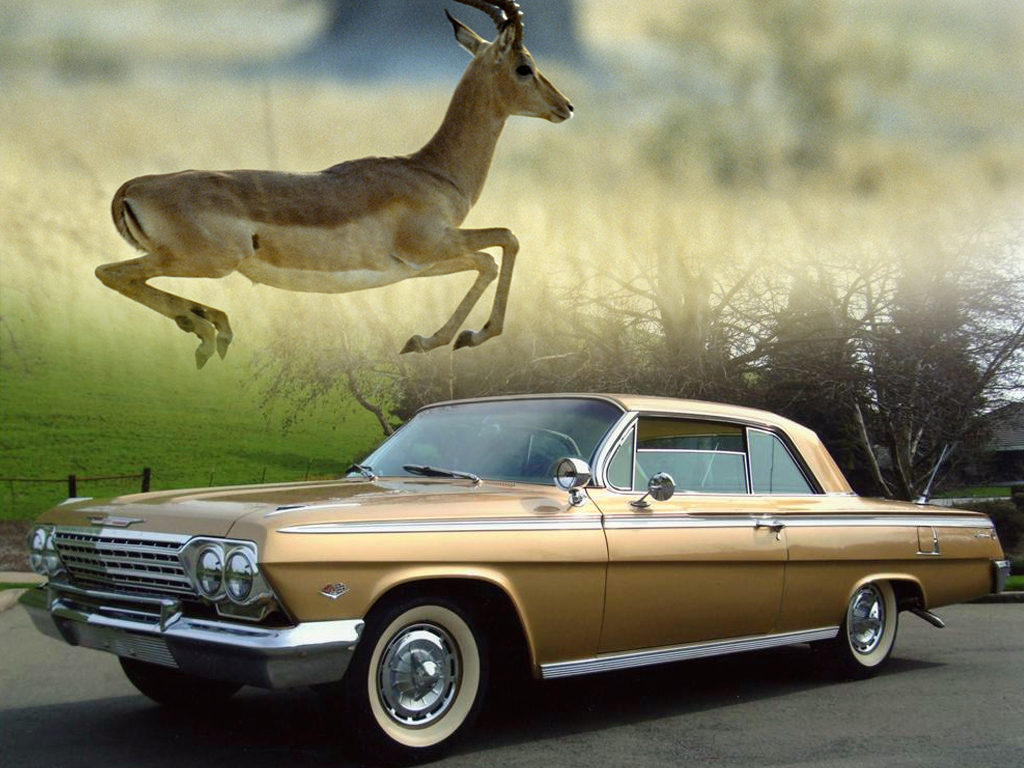 List Of Cars With Animal Names Zero To Times