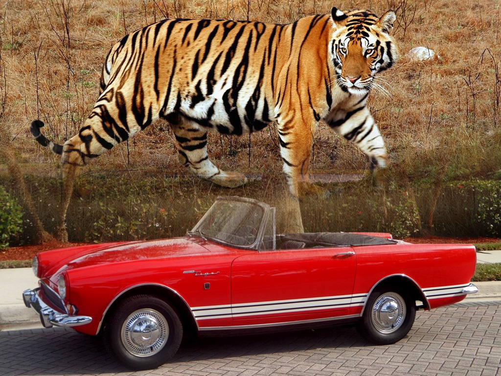 List of Cars with Animal Names - Zero To 60 Times