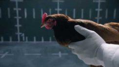 Jaguar vs Chicken | Funny Jaguar TV Commercial